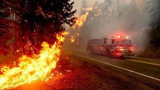 ABD'nin batı eyaletlerinde orman yangınları