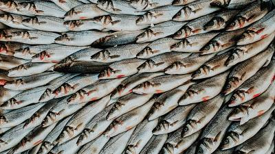 Overfishing is one of the factors driving biodiversity loss.