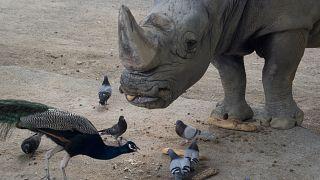 من حديقة حيوانات في إسبانيا