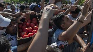 Migrants argue for a crate of tomatoes during a food distribution on the northeastern island of Lesbos, Greece, Thursday, Sept. 10, 2020.