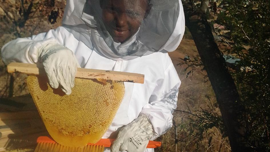 Zimbabwe's bees are being saved from extinction by an innovative new project