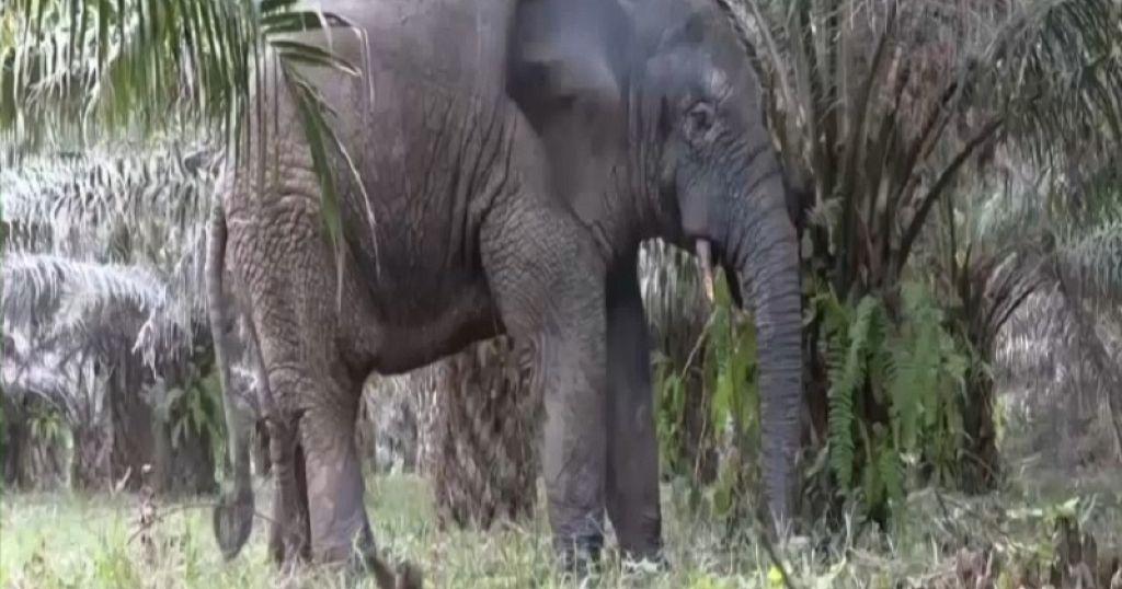 Pesky Ivorian Elephant Relocated to New Safe Home