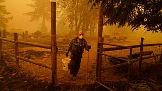 George Coble carries a bucket of water to put out a tree still smoldering on his property destroyed by a wildfire Saturday, Sept. 12, 2020, in Mill City, Ore.