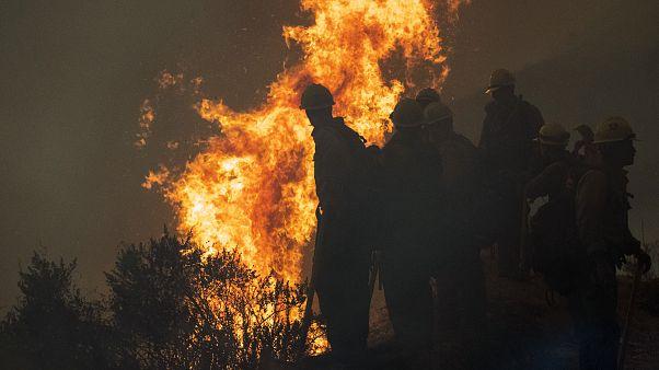 """Waldbrände durch trockenes Laub? Für Biden ist Trump ein """"Klimabrandstifter"""""""