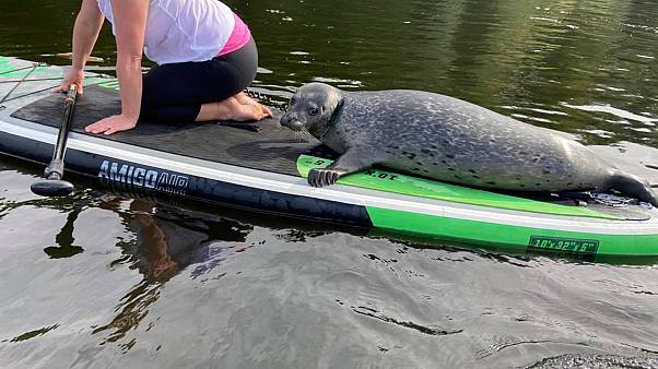 This little guy joined in with a class of beginner paddleboarders on a river in Lincolnshire.