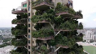 مشروع سكني أخضر صديق للبيئة في الصين