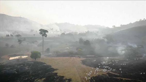 En Brasil arde el 15% del Pantanal