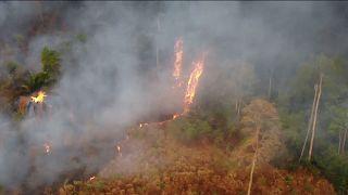 Brasilien: Regenwald steht in Flammen - und es ist kein Regen in Sicht