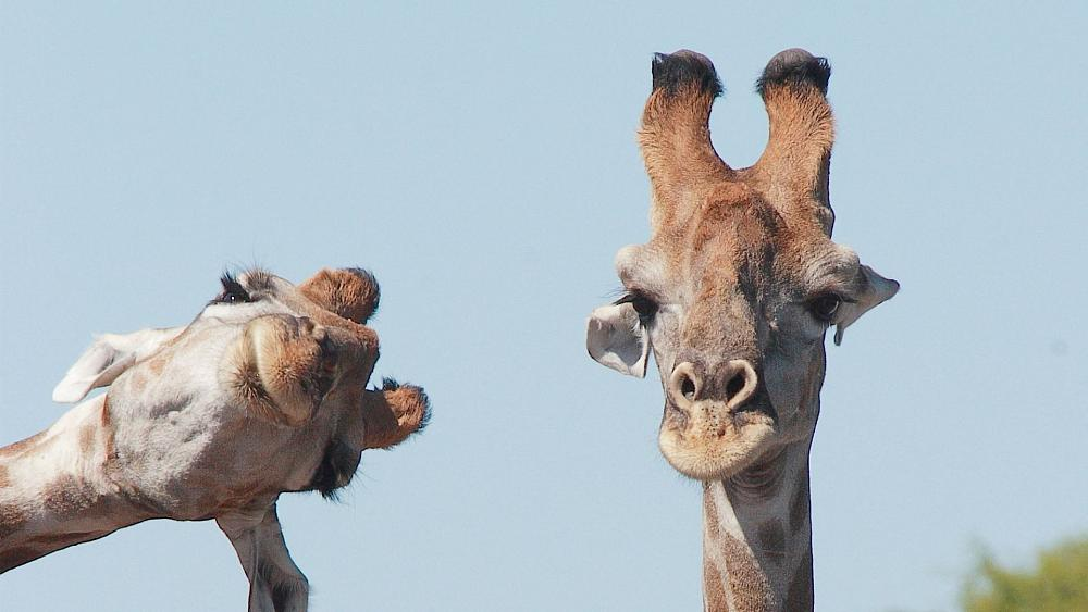 These funny animal photos are combining comedy with conservation