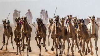 سباق الهجن في سيناء