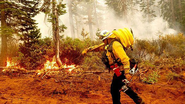 ABD'de orman yangınları