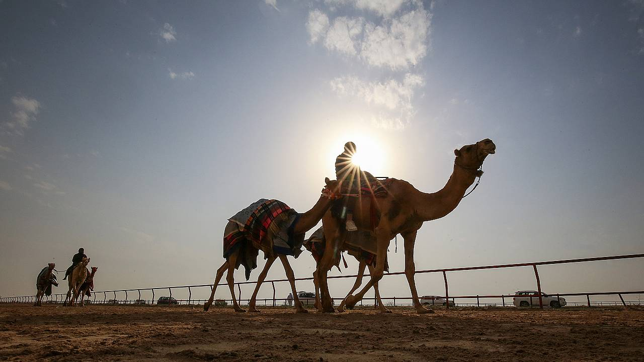 Camel racing in February 2020
