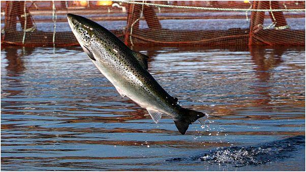 تقنية السونار وعمليات التنقيب البحري واستخدام المحركات يشكل مصدر ضغط للأسماك