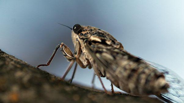 cep telefonları böcekleri öldürüyor