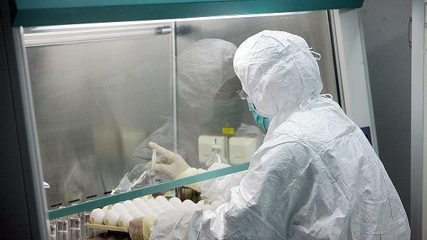 Çin'de yayılan brusella bakteris