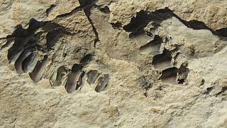 رد پای ۱۲۰ هزار ساله از انسان خردمند در عربستان