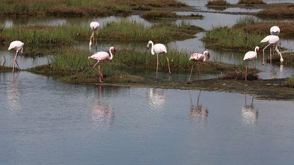 Un'area umida in Sudafrica