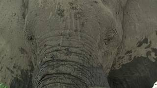 Botswana: Toxin-Producing Bacteria in Water Cause of Elephant Deaths