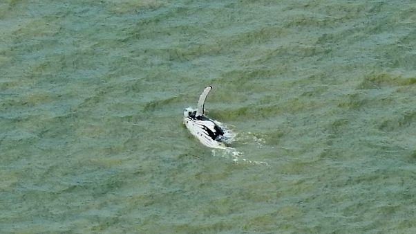 الحوت بعد خروجه من نهر التمساح