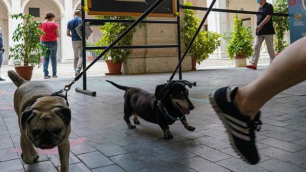Köpeğini gezdiren koronavirüs hastası yurda gönderildi