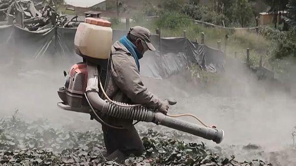 El agricultor Eudoro Correa trata de limpiar sus cultivos de la ceniza del volcán Sangay