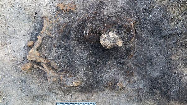 8 bin 400 yıl öncesine dayanan köpeğin kalıntıları - İsveç