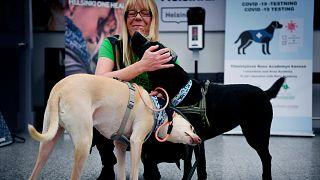 Finlandiya'da havalimanında eğitimli köpekler Covid-19 taraması yapıyor