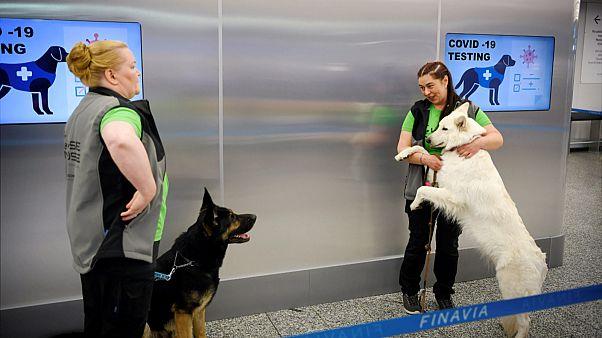 الكلاب في مطار هلسنكي