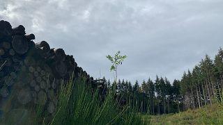 Planter des arbres pour compenser les émissions en CO2 des vols en avion, est-ce efficace?
