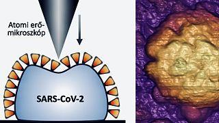 A koronavírus öngyógyító szerkezete a magyar kutatók leírása alapján