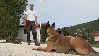 كلاب إنقاذ يتم تدريبها منذ الأسابيع الأولى لولادتها