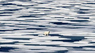 دب قطبي يقف على الجليد في مضيق فرانكلين في أرخبيل القطب الشمالي الكندي.