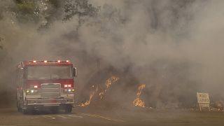 Rekord-Waldbrände wüten in Kalifornien - auch im Weinanbaugebiet Napa Valley