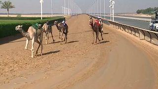سباق الهجن في دبي