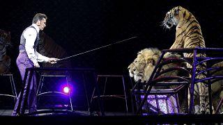 Sirklerde vahşi hayvanlarla gösteri