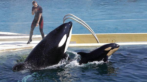 Espectáculo en el delfinario francés de Marineland