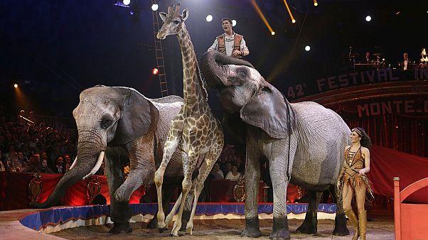 Photo d'illustration : des animaux sauvages sur la piste du 42e festival international du cirque de Monte-Carlo, le 23 janvier 2018
