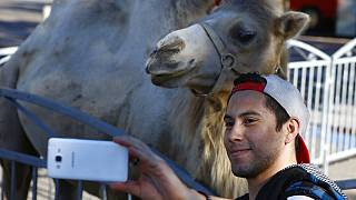 In this Sept.7, 2016 file photo, a visitor takes a selfie with a camel during a circus performance at Bastille square in Paris.