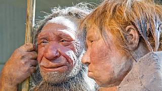FILE - This Friday, March 20, 2009 file photo shows reconstructions of a Neanderthal man and woman in a German Museum.