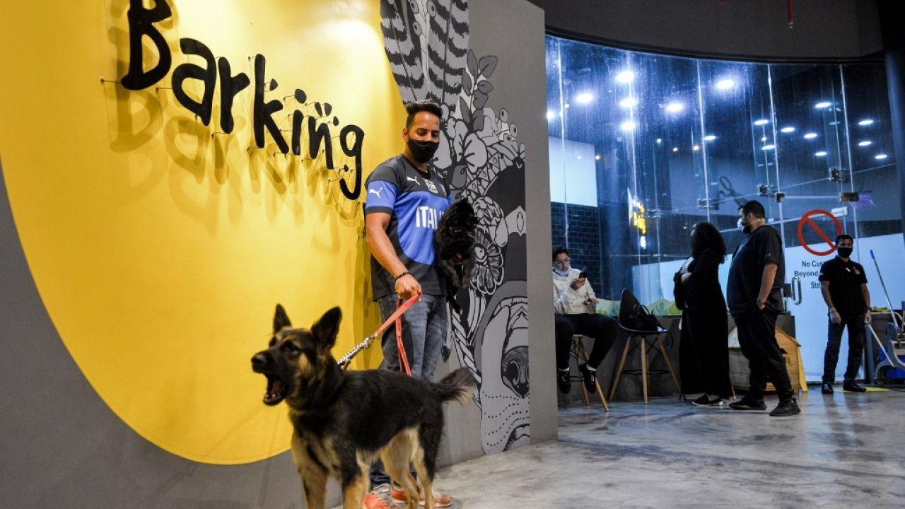 """""""Barking Lot"""" cafe in Saudi Arabia's eastern Gulf city of Khobar"""