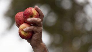 Итальянские пестициды обнаружены в швейцарском заповеднике