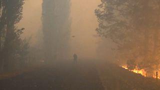 На Востоке Украины бушуют лесные пожары