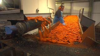 Как заставить пищевые отходы работать на экономику?