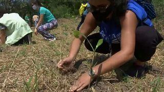 Brésil : des jeunes mobilisés pour reboiser la forêt