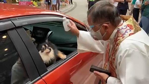 يبارك الفلبينيون حيواناتهم الأليفة في عيد القديس فرنسيس، شفيع الحيوانات