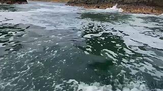 Catástrofe ecológica en Kamchatka: miles de animales aparecen muertos en sus playas