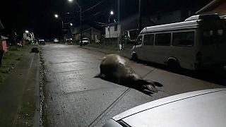 El particular intruso del barrio chileno