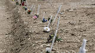 White crosses delimiting the areas for new burials are scattered at the Maggiore cemetery in Milan, Italy, Friday, May 8, 2020.