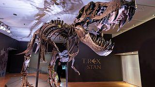 В Нью-Йорке скелет тираннозавра ушел с молотка за $31,8 млн.