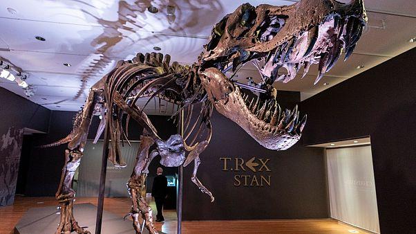 Dinozor iskeleti açık artırmada 31.8 milyon dolara satıldı